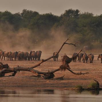 Lunagwa Elephants
