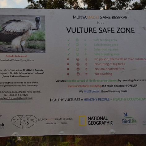 We are proud to be a Vulture Safe Zone