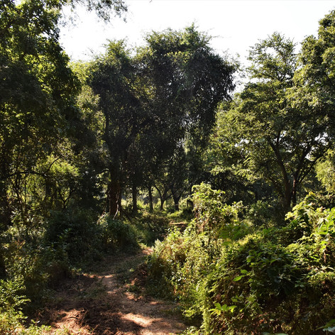 Thick vegetation along the Luangwa River