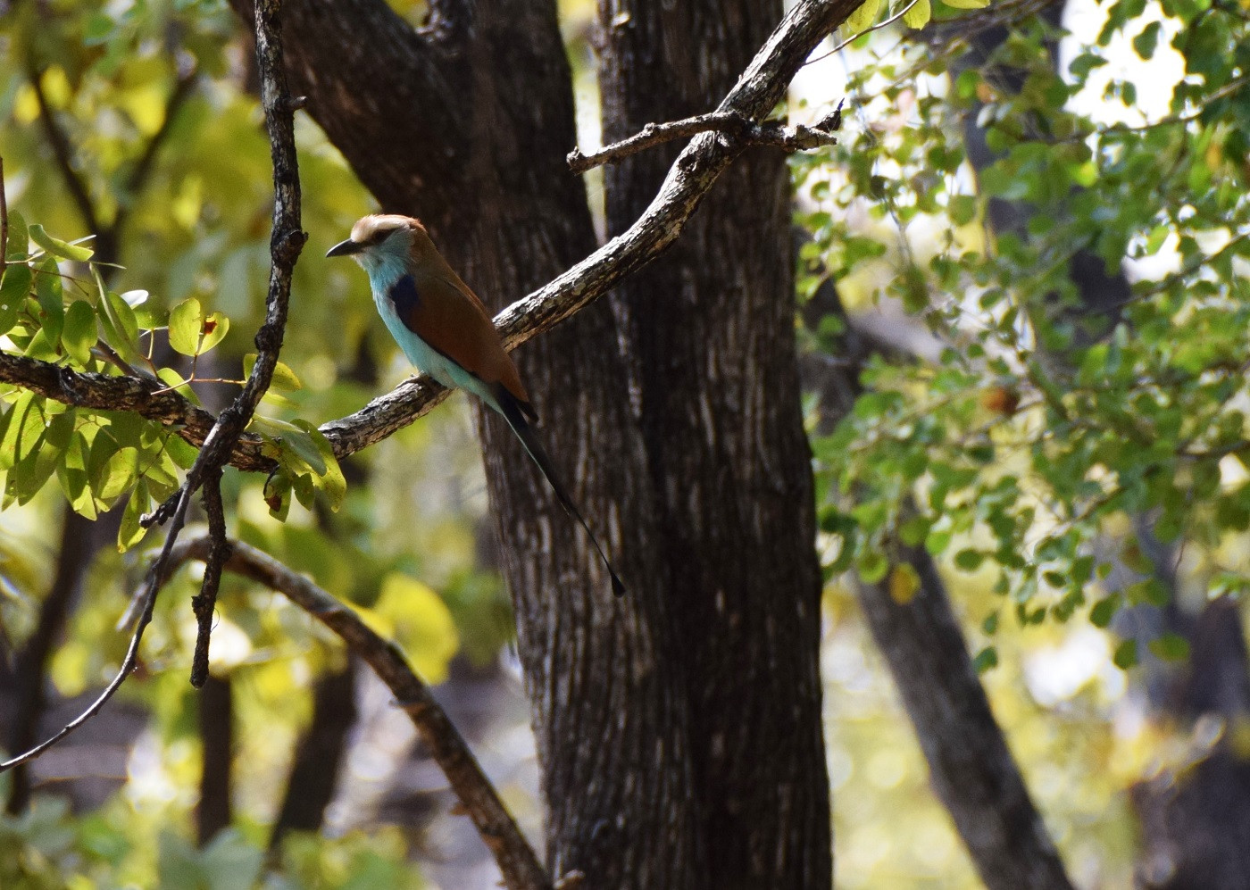 Fantastic birding location with rare species