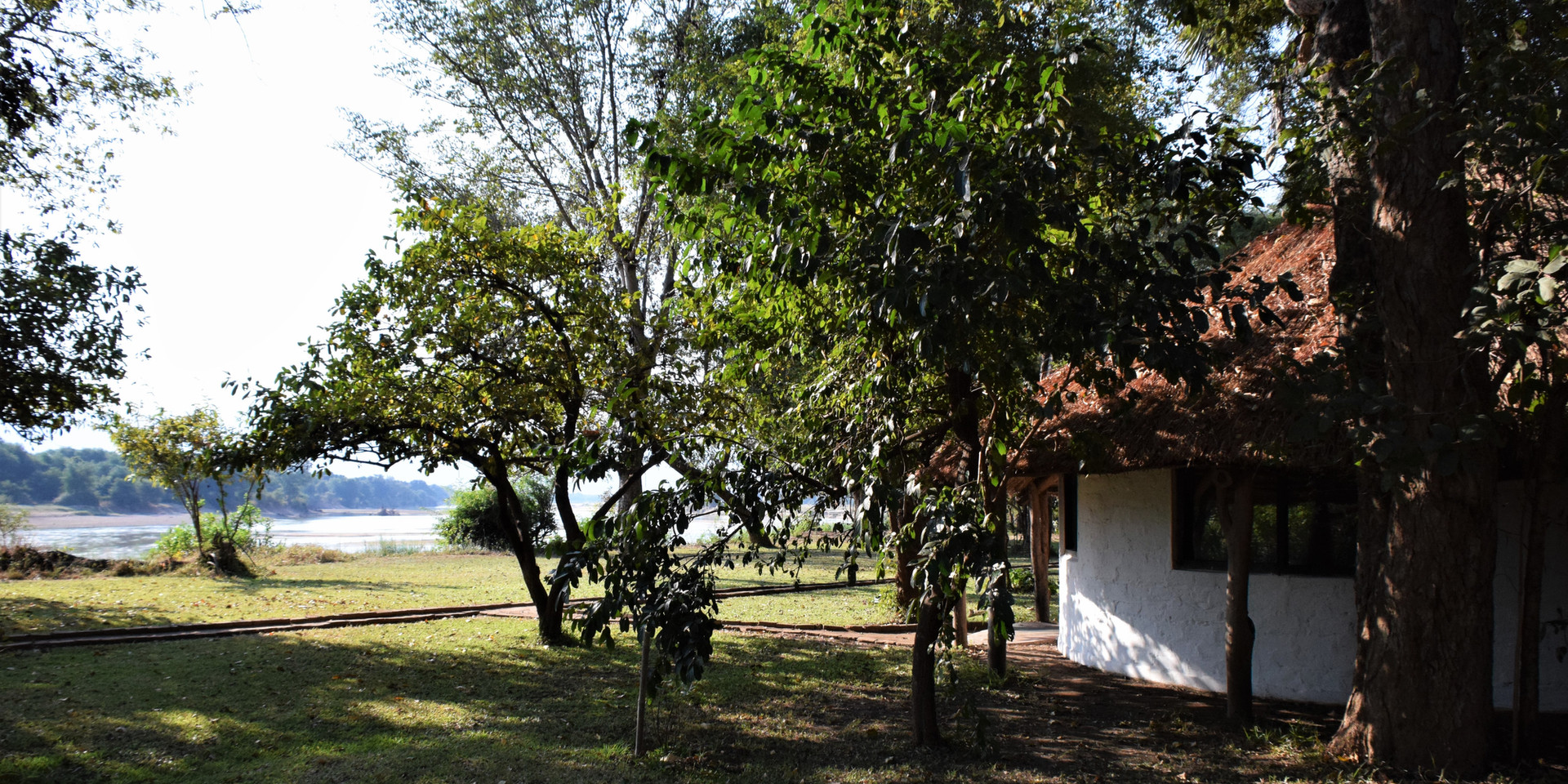 The camp is spread out under beautiful old trees with a well kept lawn to the edge of the Luangwa River