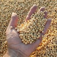 Preço da soja abre março em alta