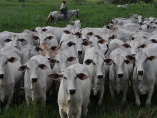 Preço do boi magro sobe 11% de janeiro a setembro, diz Cepea