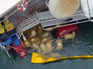 Navio com mais de 14 mil ovelhas naufraga na Europa; veja imagens