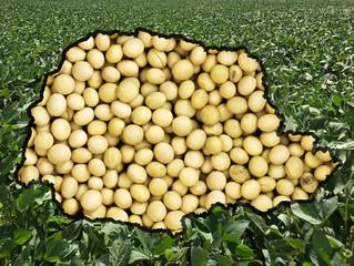 Paraná: ritmo de plantio da soja é o pior em pelo menos 5 anos