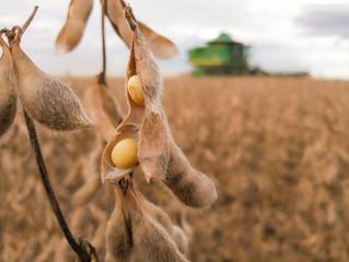 Preço da soja cai 2% na Bolsa de Chicago