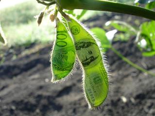 Preço da soja atinge R$ 95 nos portos e país negocia mais de 700 mil toneladas