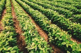 Paraná deve produzir 23,4 milhões de toneladas de grãos