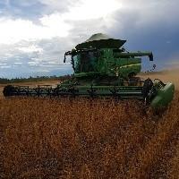 PIB da agropecuária deve crescer até 4% em 2020