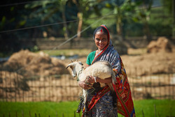 Farmer, Sylhet