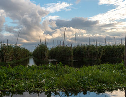 Floating gardens, Inle
