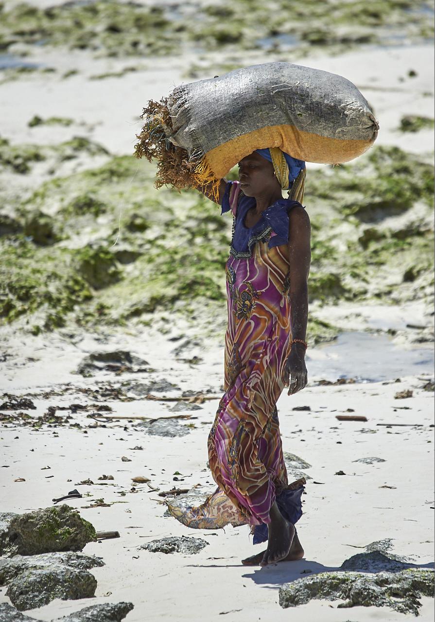 Seaweed farmer, Jambiani beach