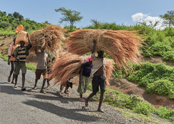 Straw carriers, Konso