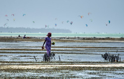 Seaweed farmer, Paje beach