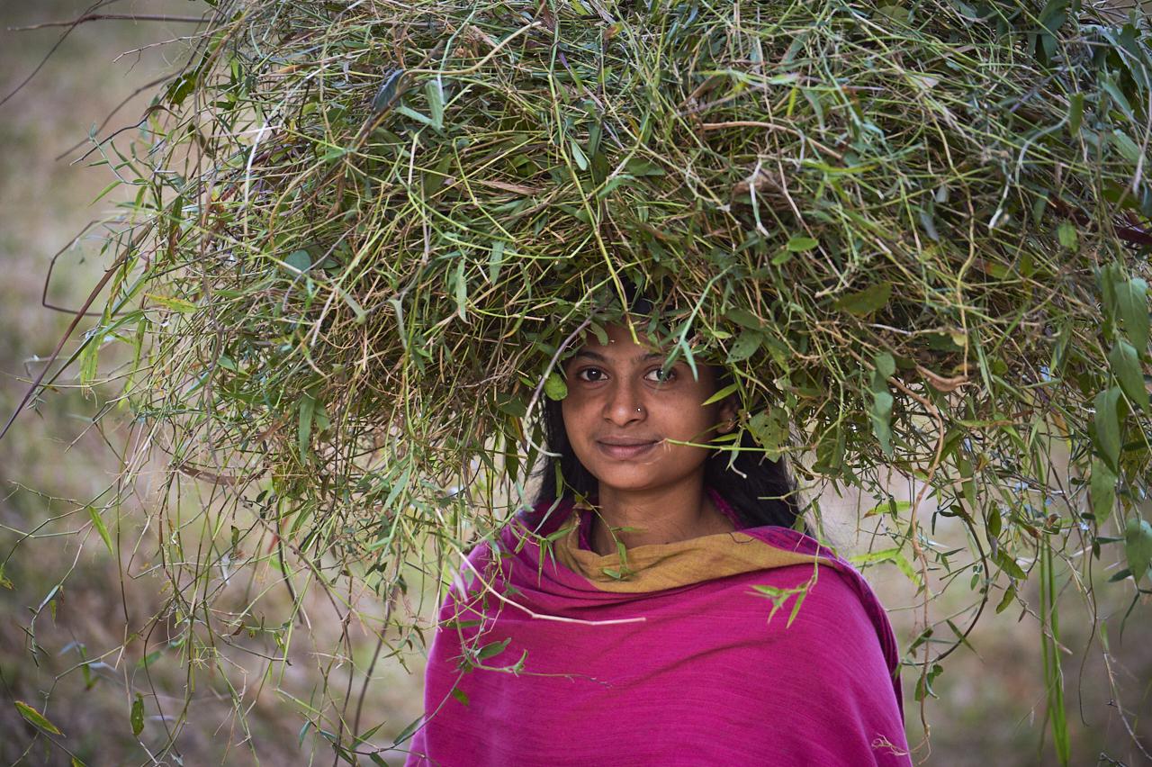 Farmer, Sreemangal, Bangladesh
