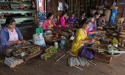 Rolling cheroot cigars, Inle