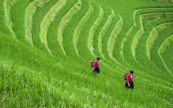 Longji Rice Terraces - Guilin, China