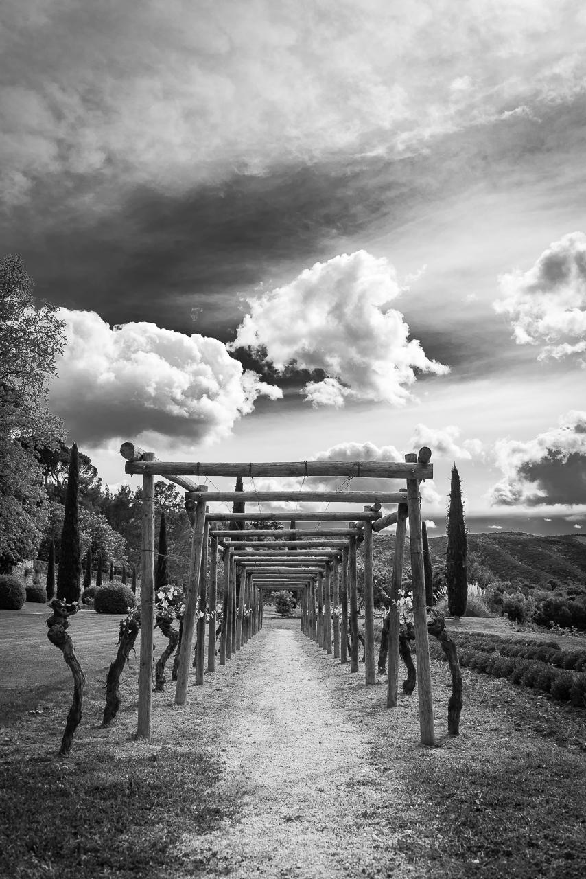 Vineyard, Provence