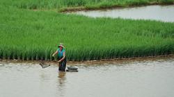 Fisherwoman, Red river