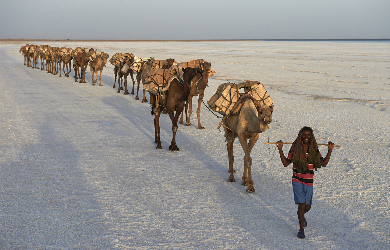 Salt caravan, Danakil Depression