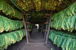 Tobacco drying barn, Pinar del Rio