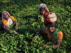 2018_Dec_30_Bangladesh_9016