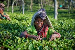 2018_Dec_30_Bangladesh_8894
