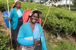Tea worker, Pedro Estate