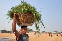 2018_Dec_29_Bangladesh_5757