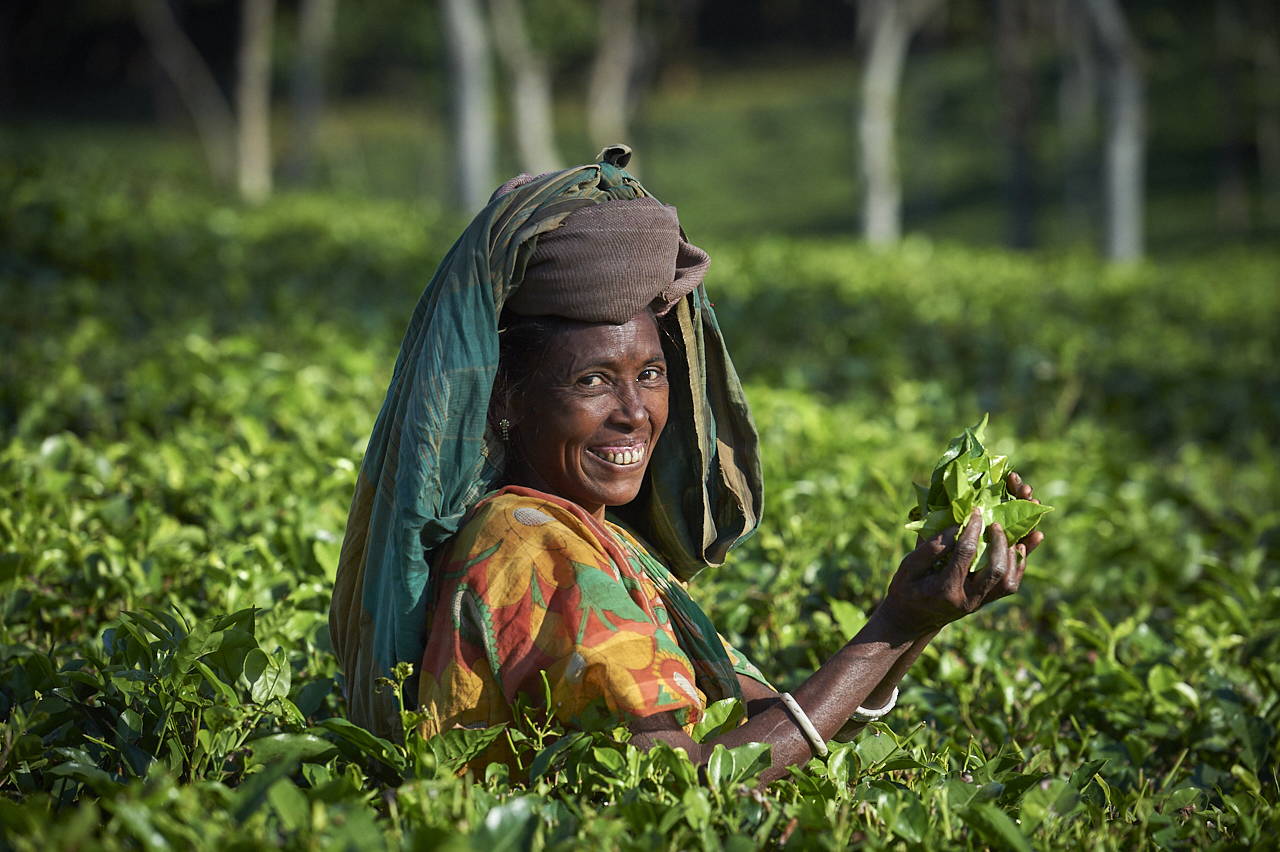 Tea picker, Sreemangal