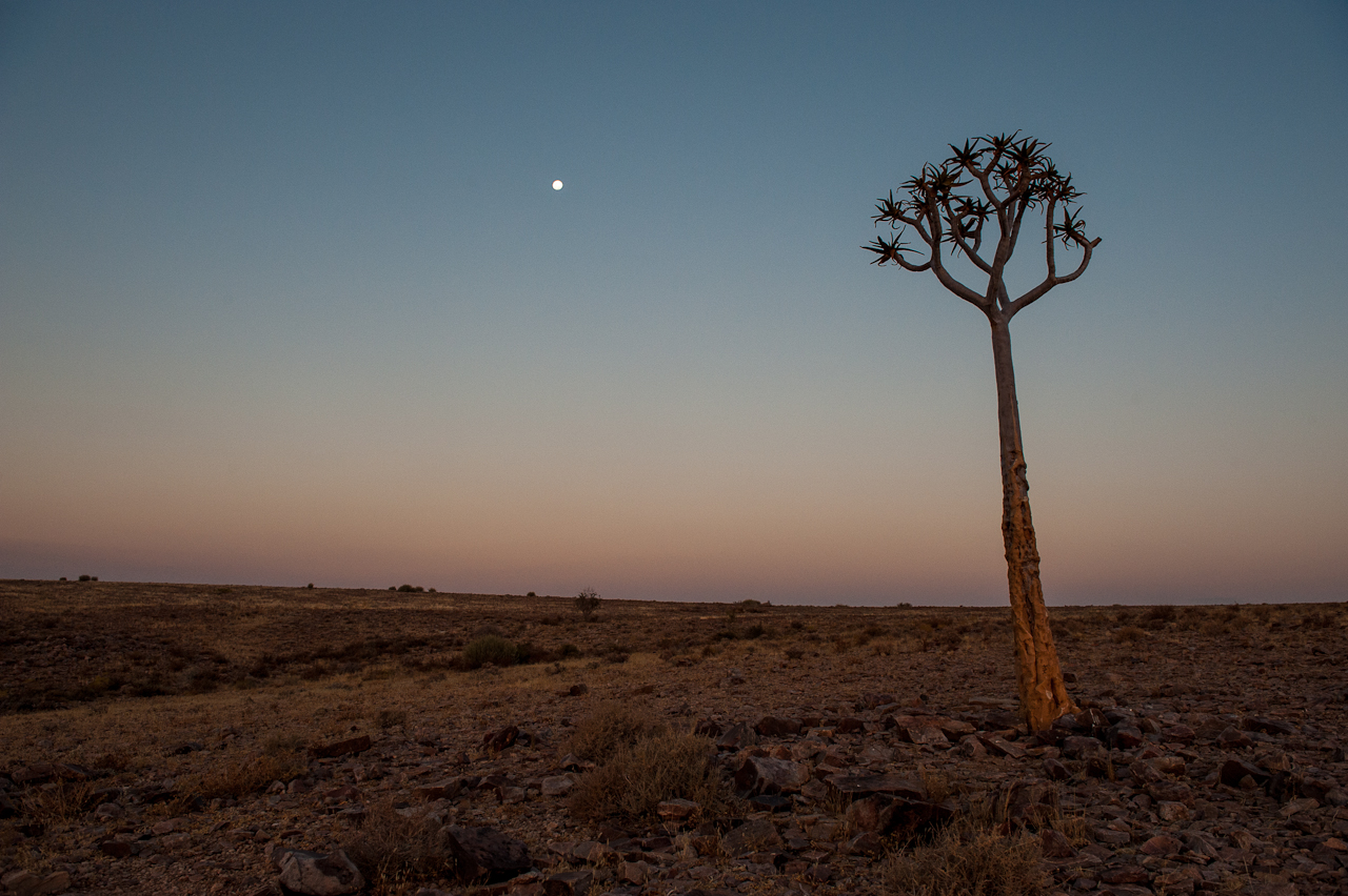 Quiver tree, Fish river canyon
