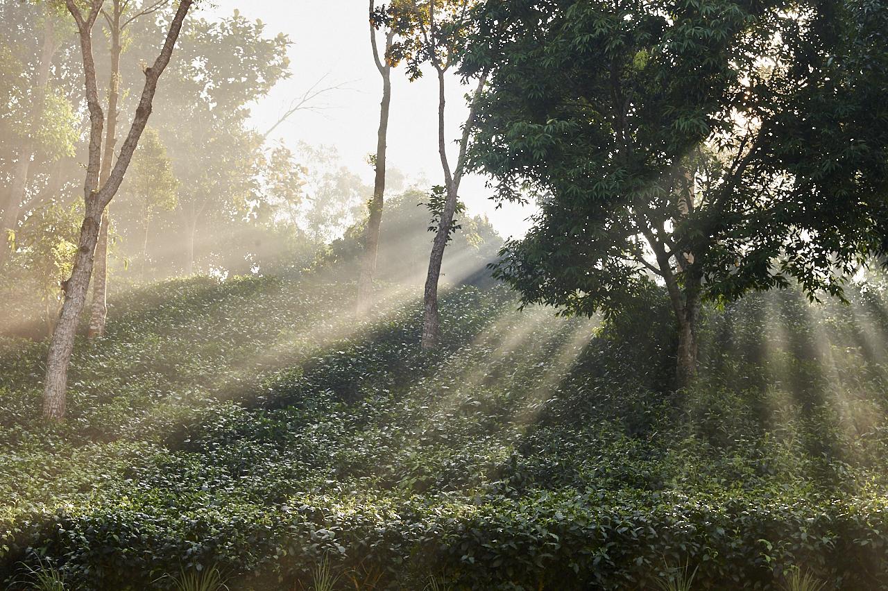 2018_Dec_30_Bangladesh_5796