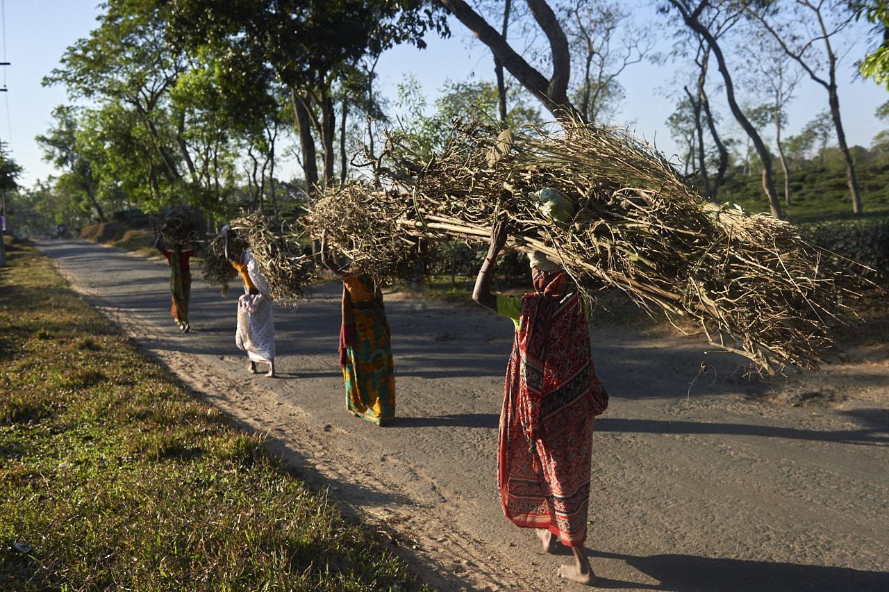 2018_Dec_30_Bangladesh_9121