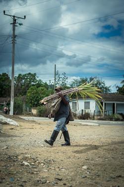 Sugar cane farmer, Ignaza