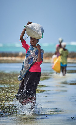 Seaweed farmer, Zanzibar
