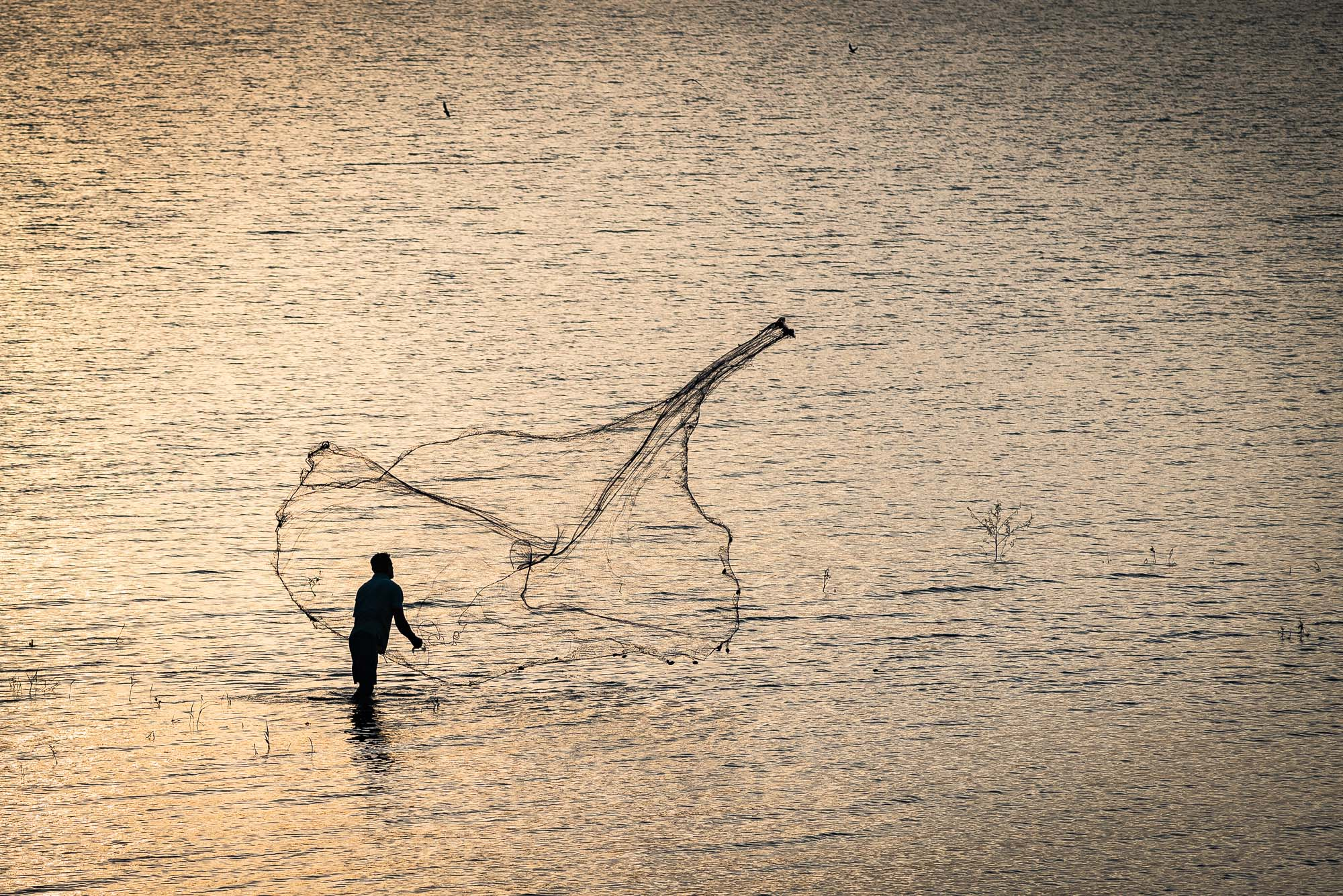 Fisherman, Polonnaruwa lake