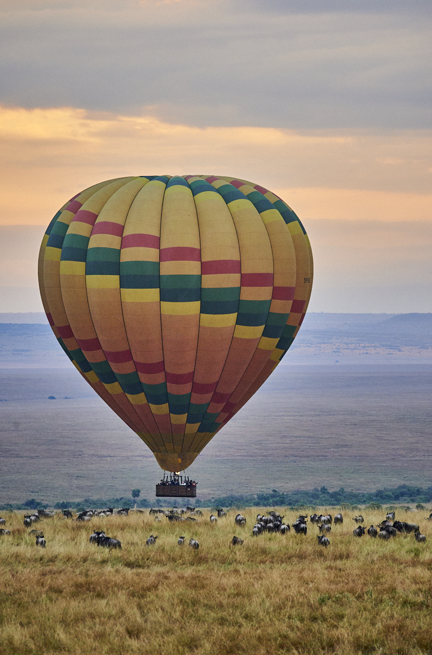Hot air balloon over wildebeest