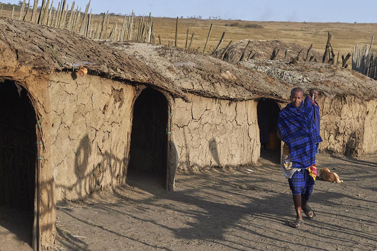 Masai maniata, Ngorongoro
