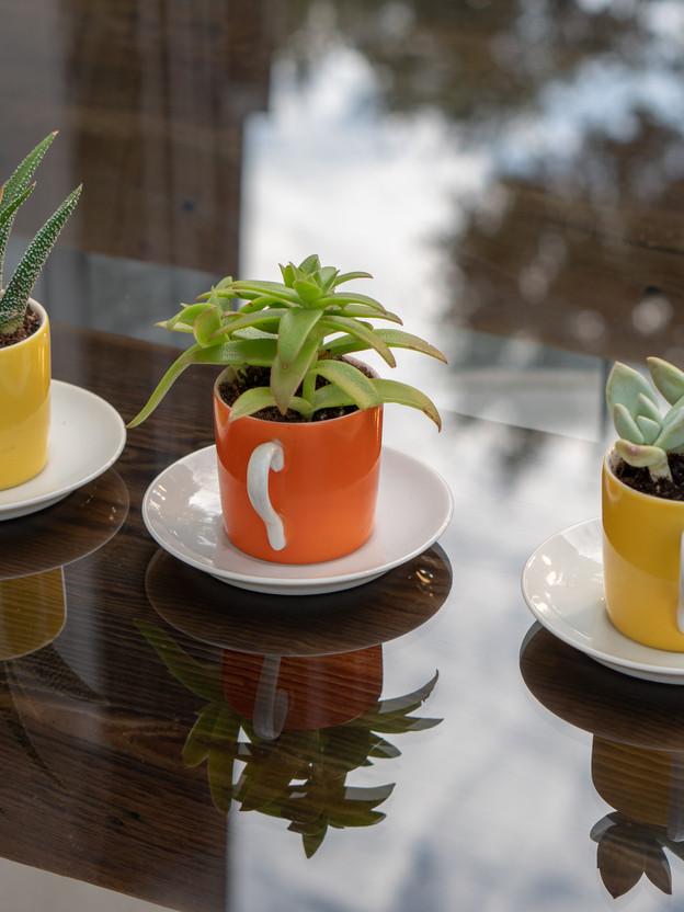Teacup Succelent Planters