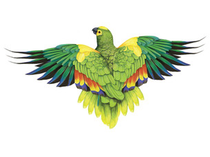 Tropical birds by Alisha Dutt Islam