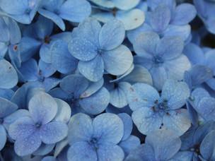 Flower Show by Rohini Kejriwal