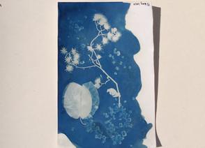 Cyanotype Prints by Prajvi Mandhani