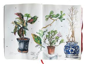 Sketchbook Sunday: Shreya Parasrampuria