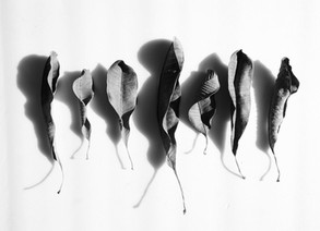 The Dried Leaf Project by Damini Rathore