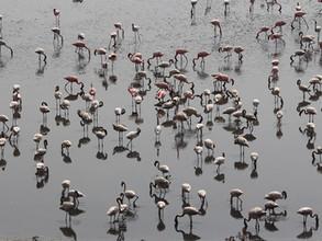 Flamingos in Bombay by Priyamvada Mangal