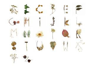 Niharika Basoae's Natural 36 Days of Type project
