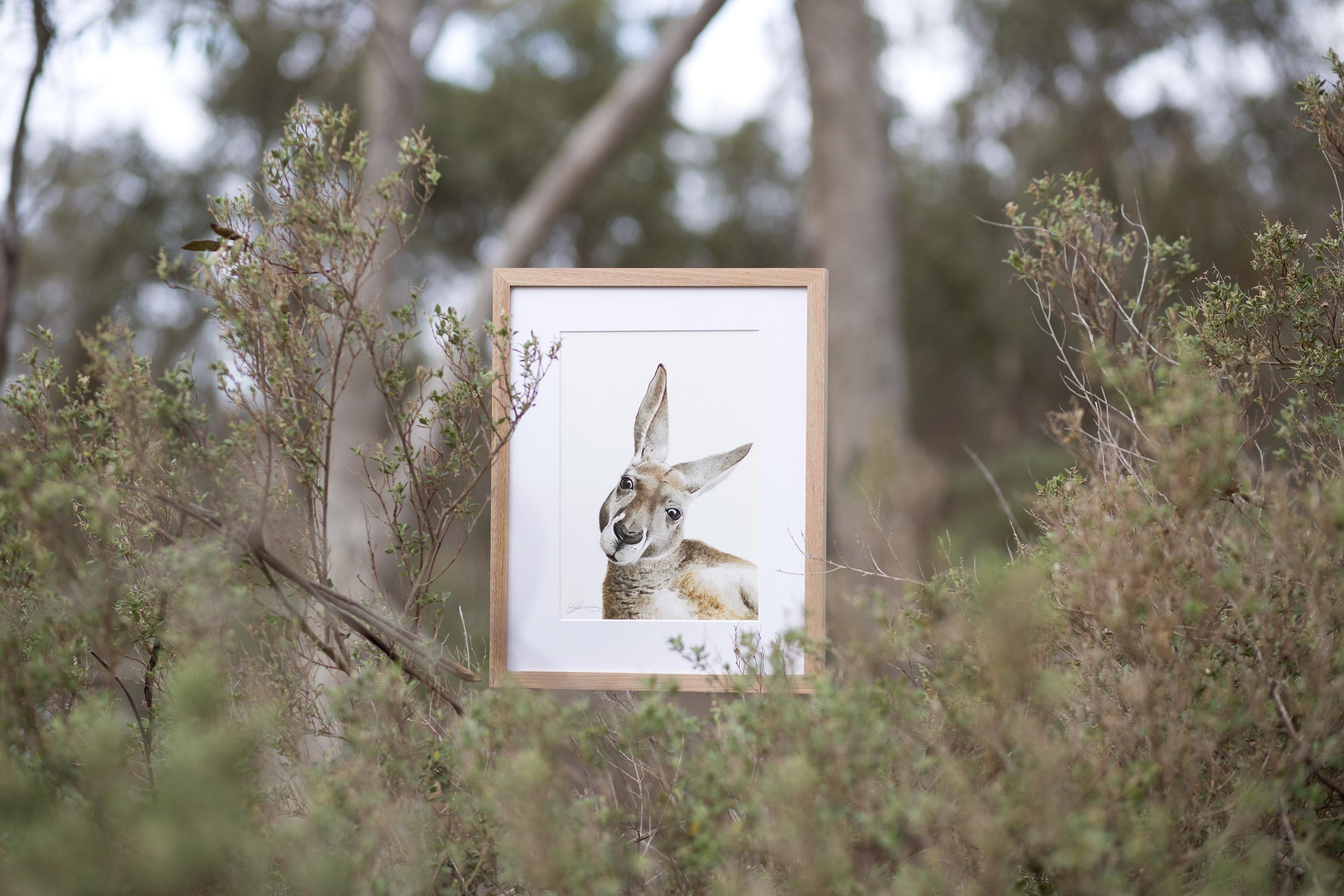FMBD_Australian_Kangaroo