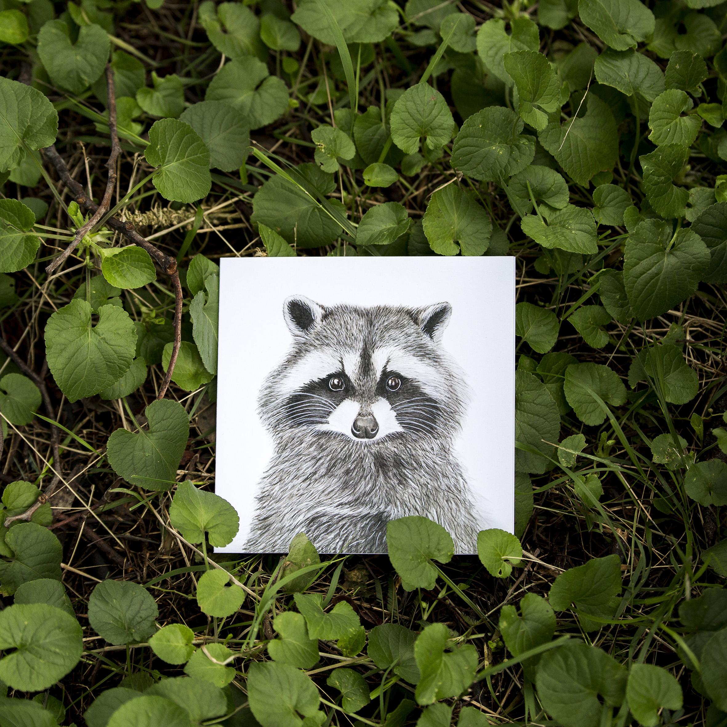 FMBD_Woodlands - CARD - Raccoon
