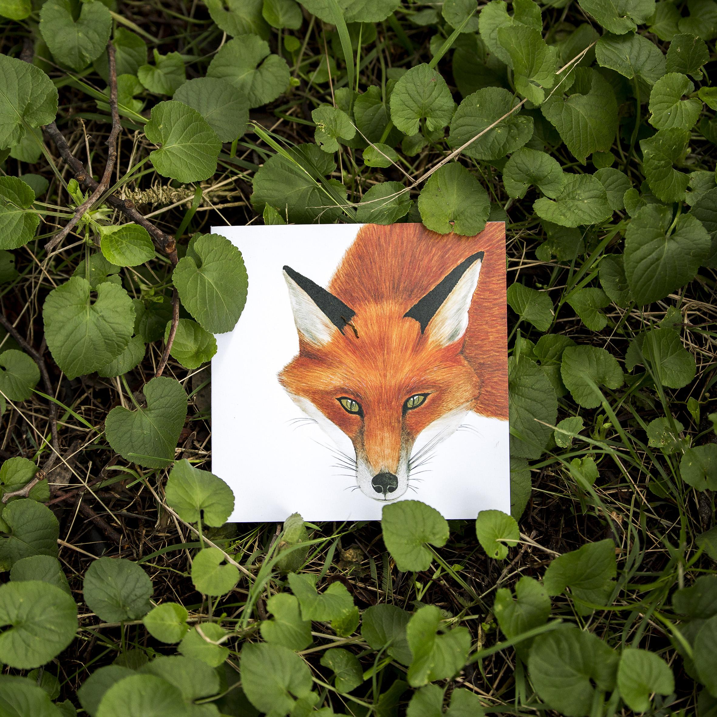 FMBD_Woodlands - CARD - Fox