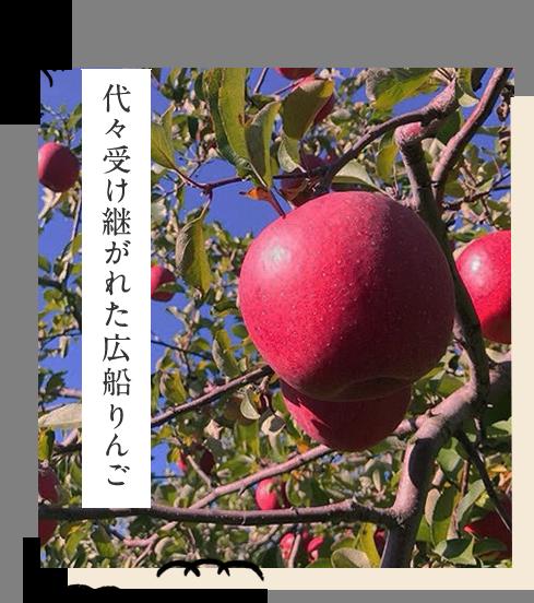 代々受け継がれた広船りんご